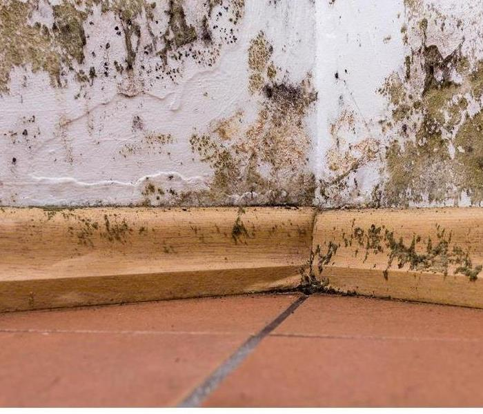 Mold Remediation Why Mold Keeps Growing Back